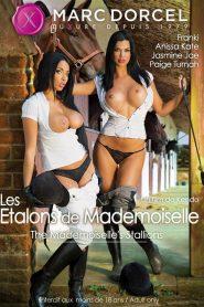 Les Étalons De Mademoiselle